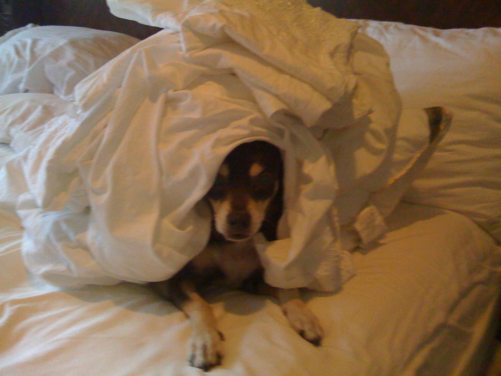 customer-client-dog