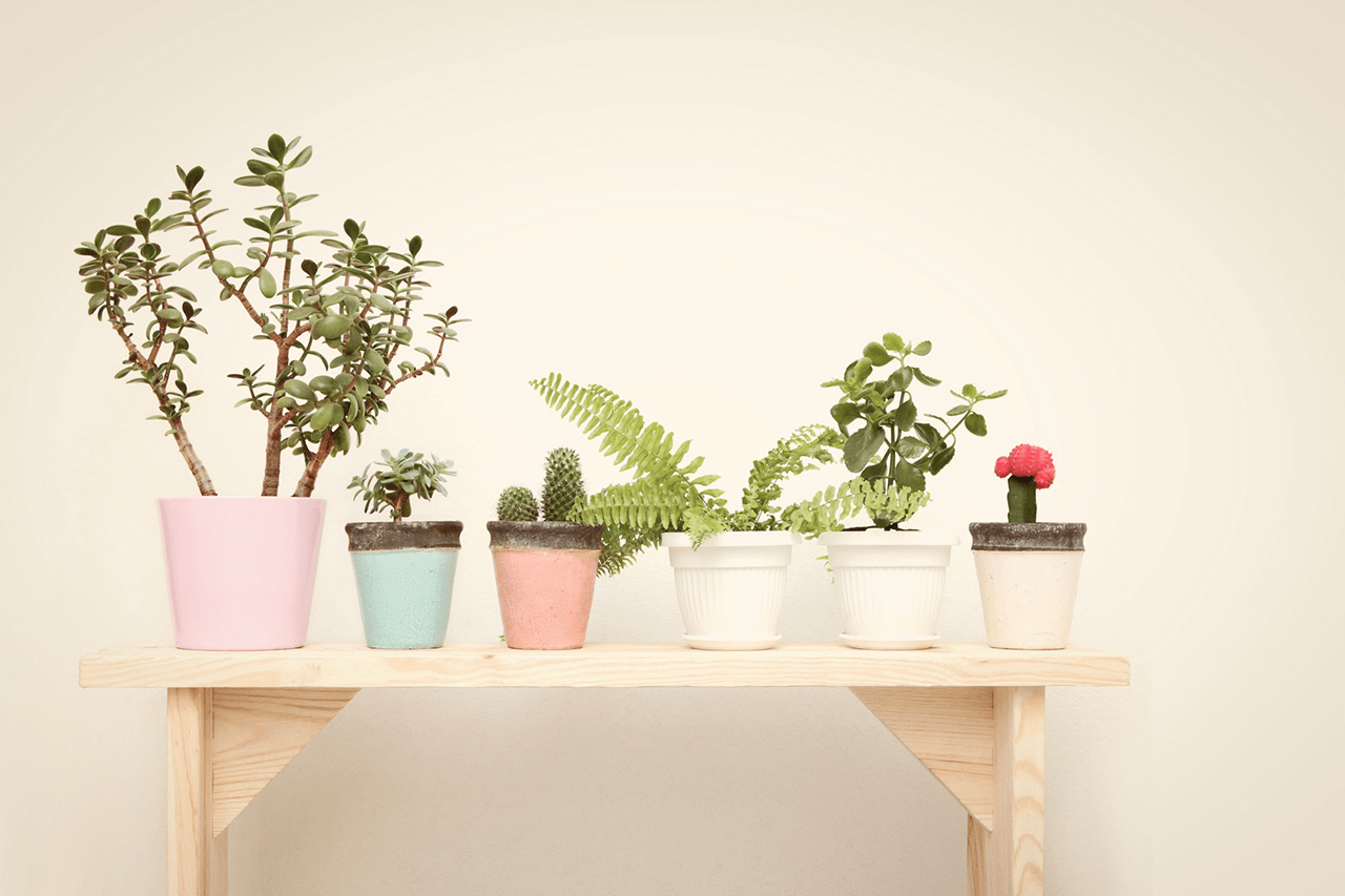 10 plants-to-clean-indoor-air